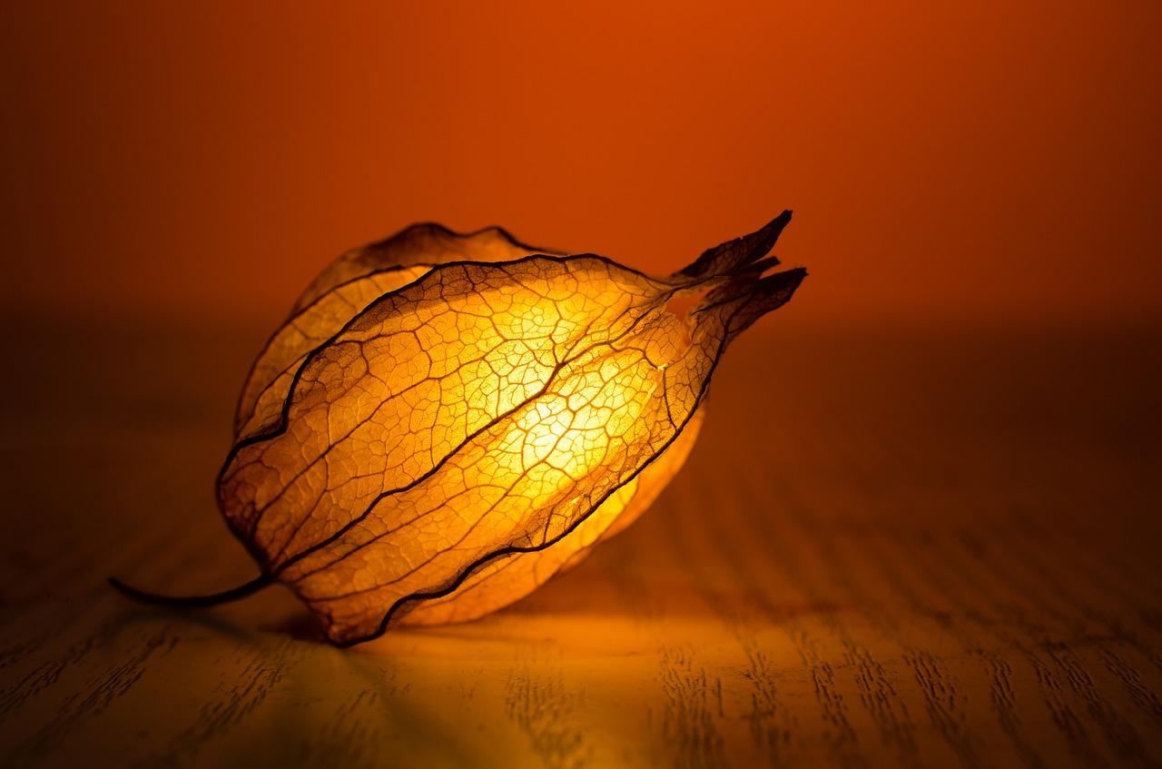 lampadina fiore