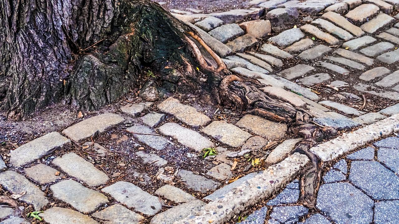 radice che rompe marciapiede