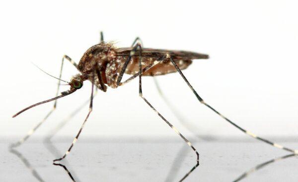 La disinfestazione dalle zanzare 2020