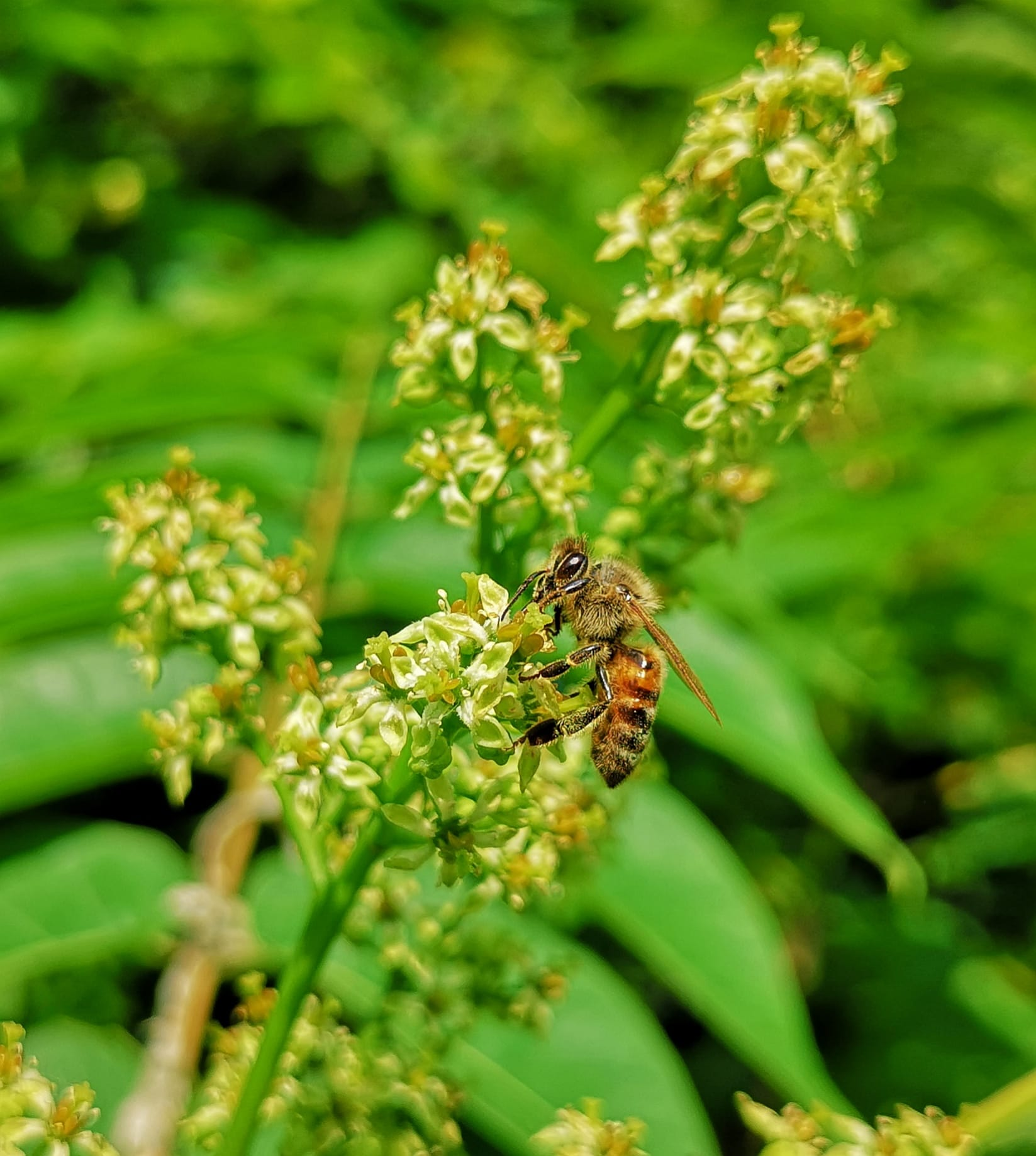 apicoltura nei parchi
