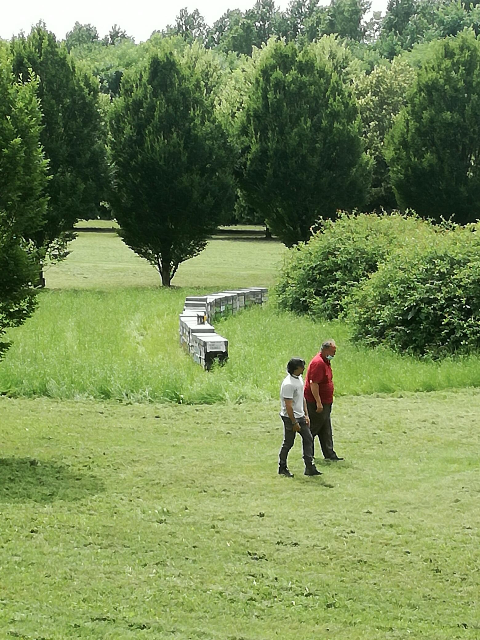 arnie apicoltura nei parchi