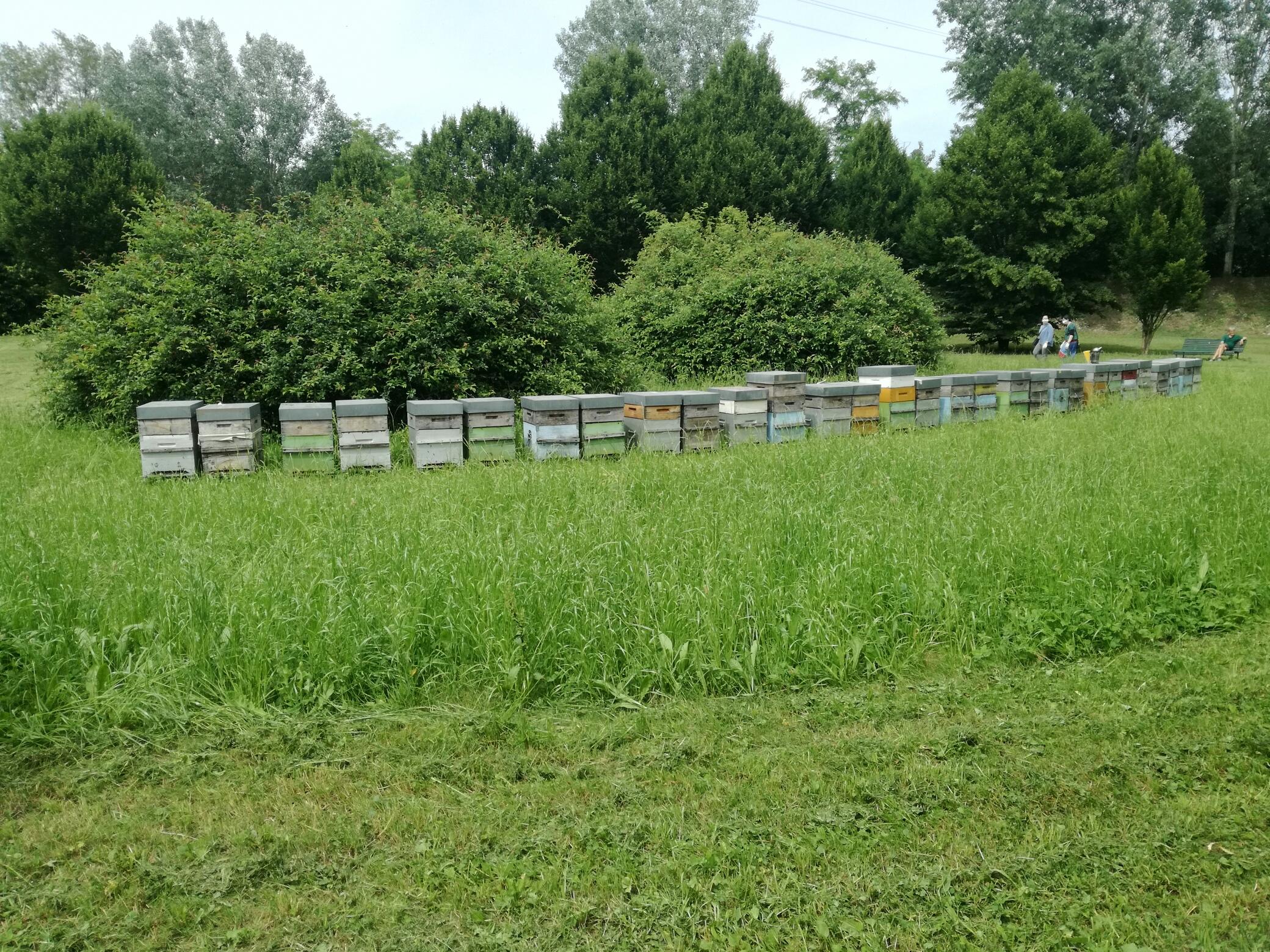 arnia apicoltura nei parchi