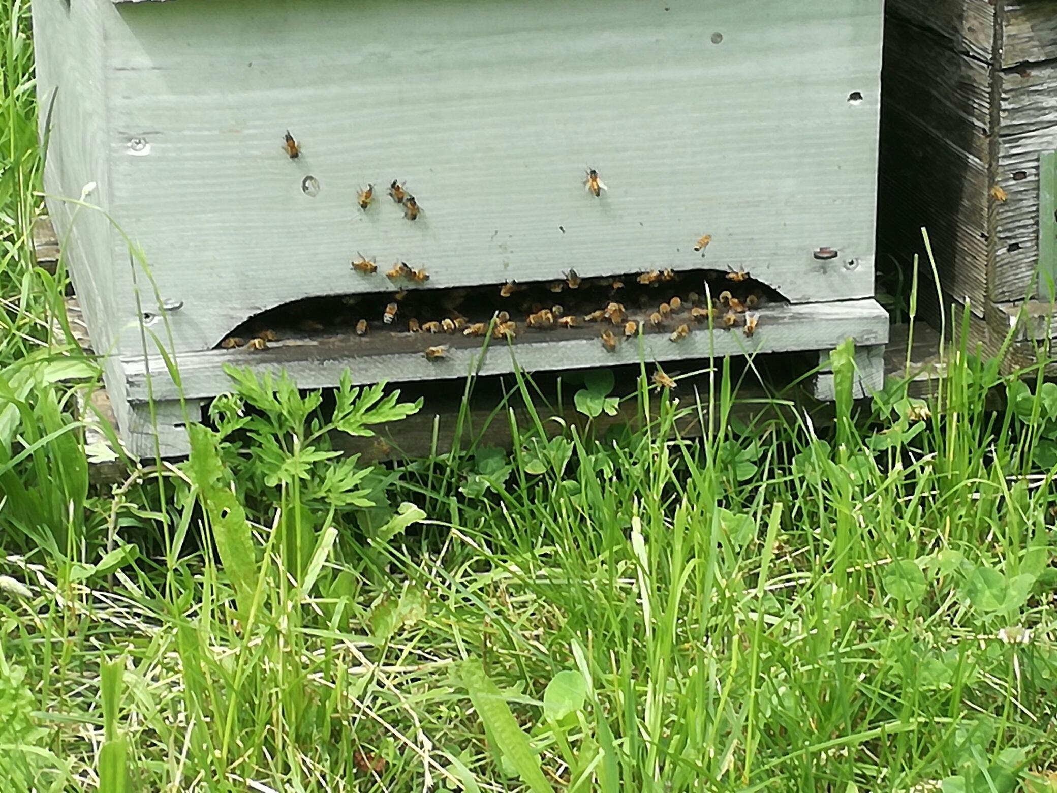 api arnie apicoltura nei parchi
