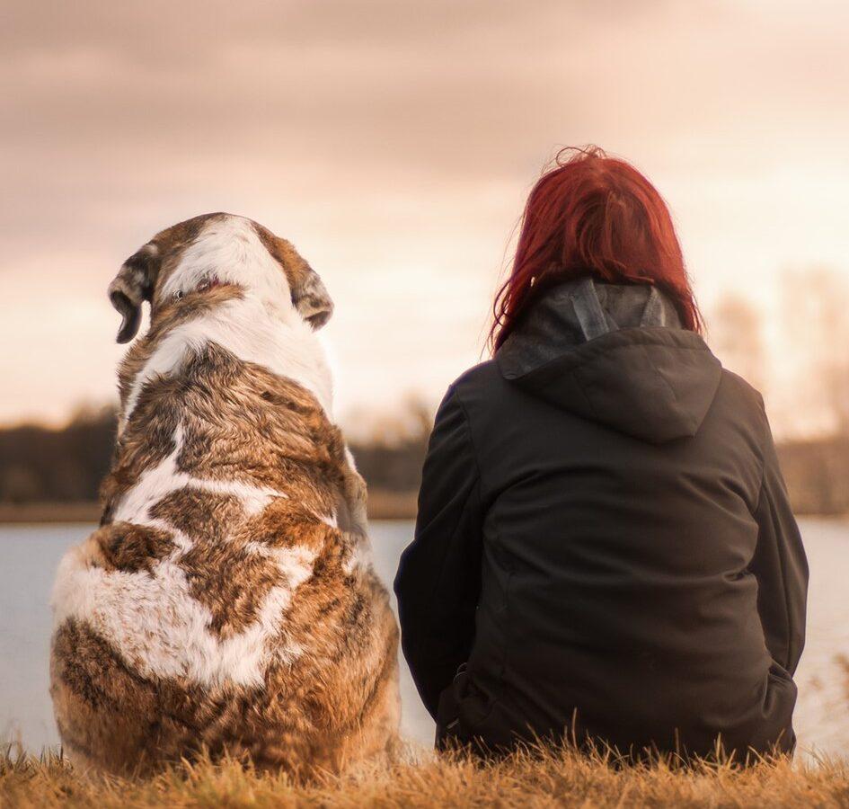 Un vero amico non si abbandona! – Campagna contro l'abbandono degli animali