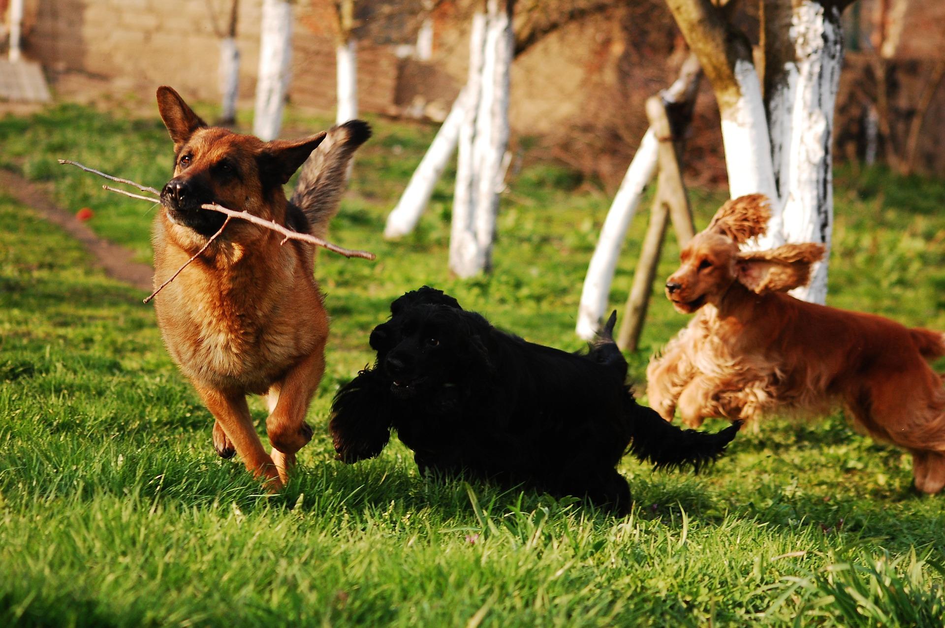 Dog sitter per famiglie in quarantena: collaborazione con associazione Fiba
