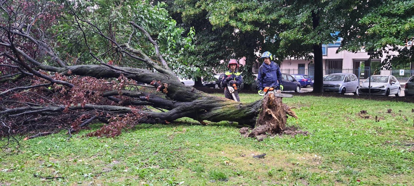 giardino craxi albero caduto