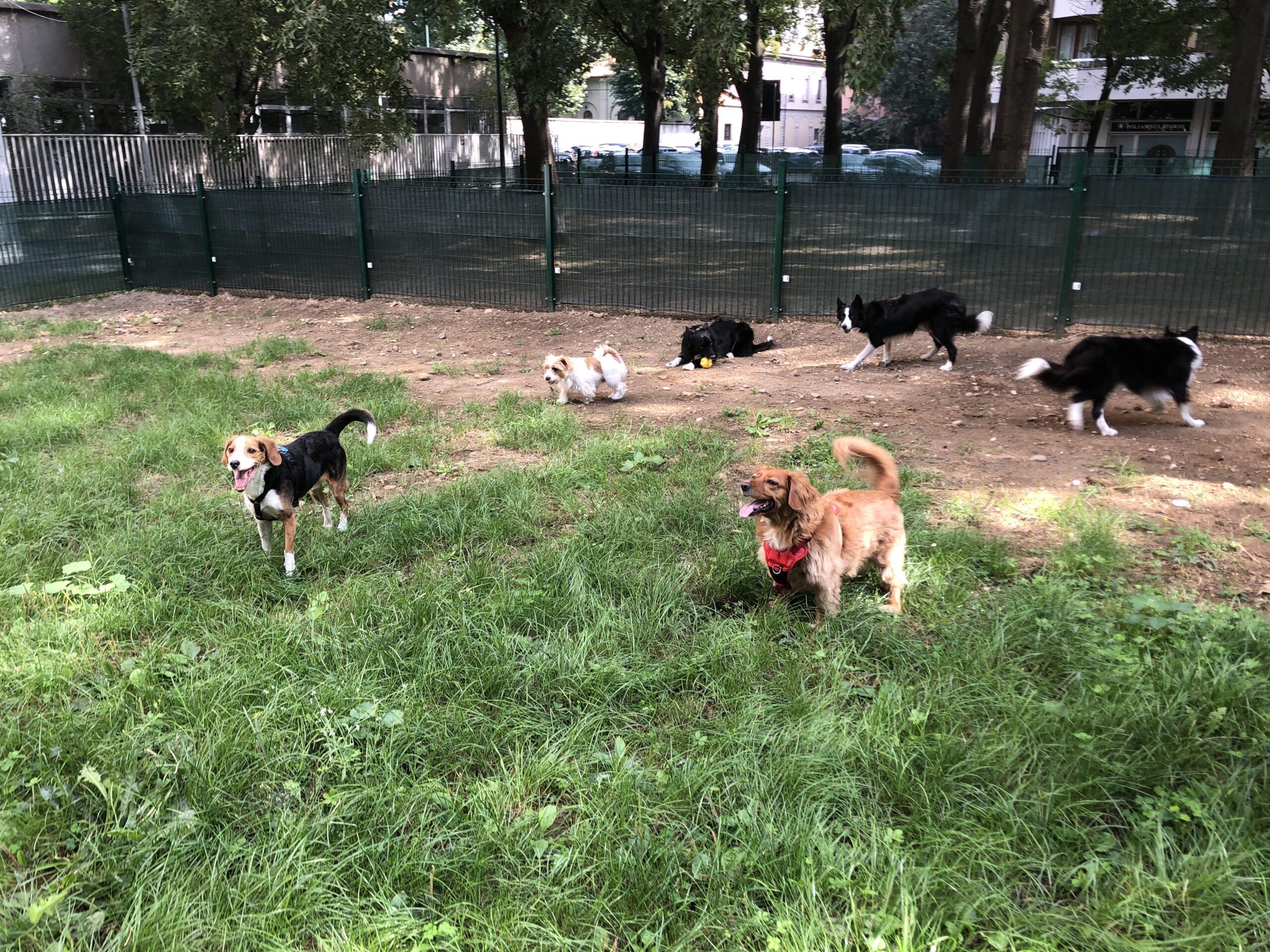 area cani crisafulli