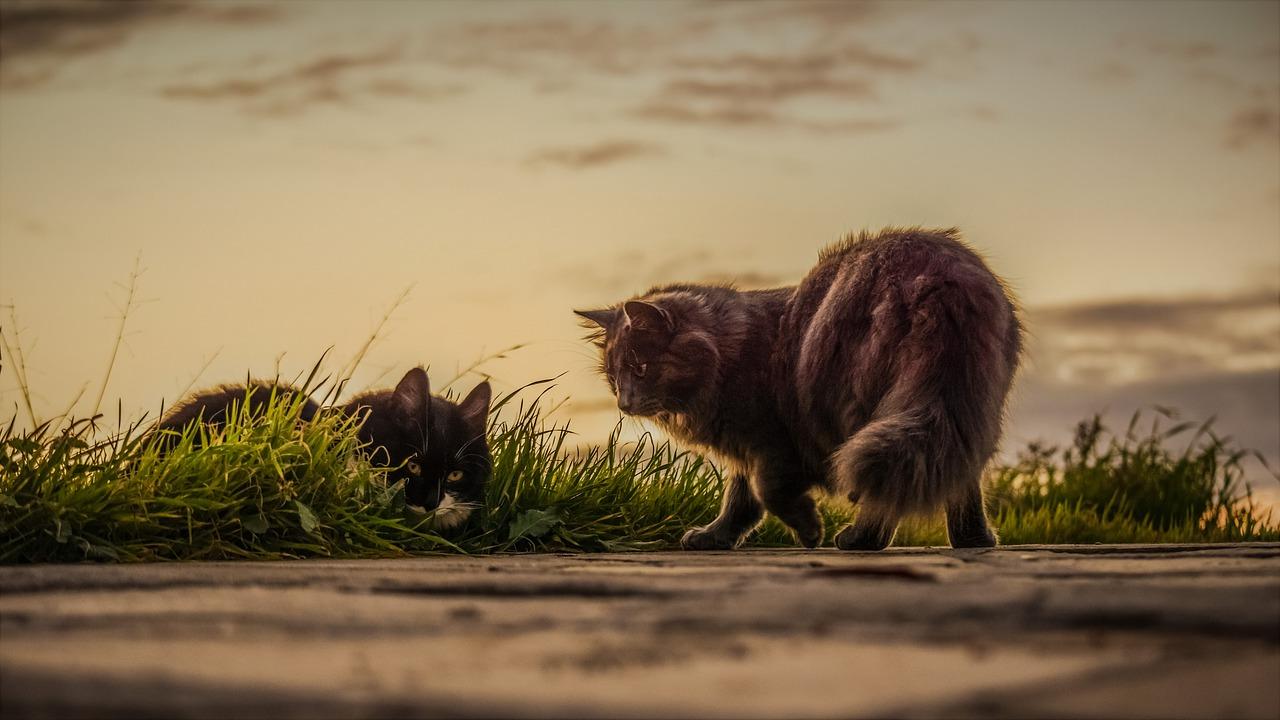 Inaugurata l'oasi felina di via Madonna del Bosco: rifugio protetto per i gatti randagi