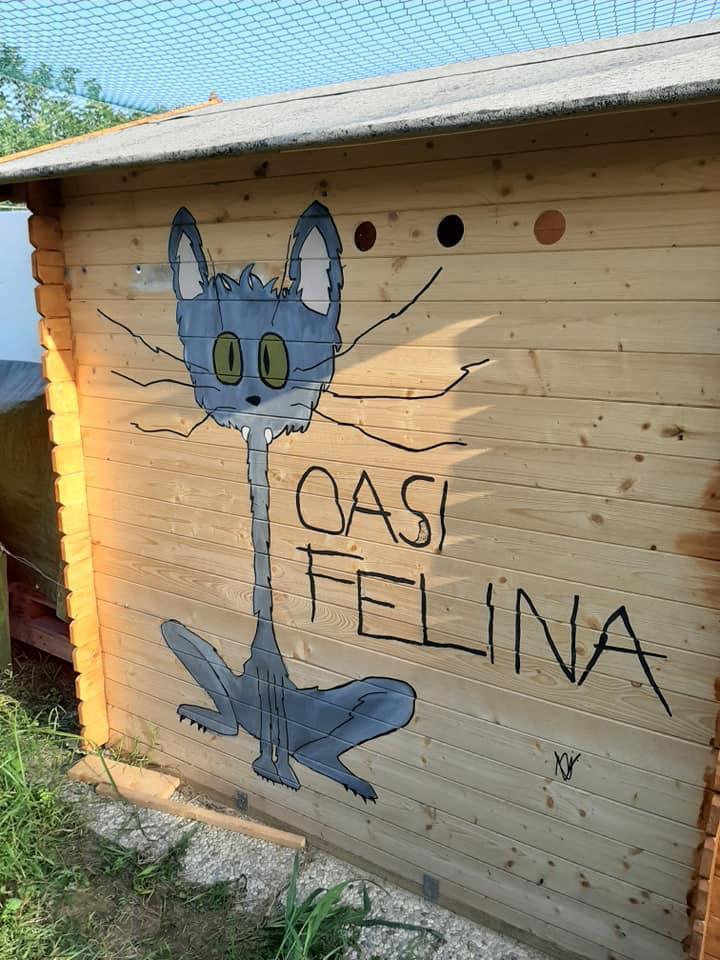 disegno di un gatto oasi felina