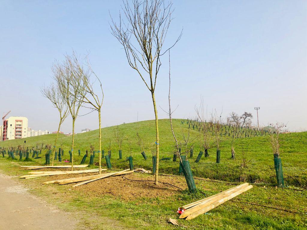 Il parco Bergamella sempre più verde