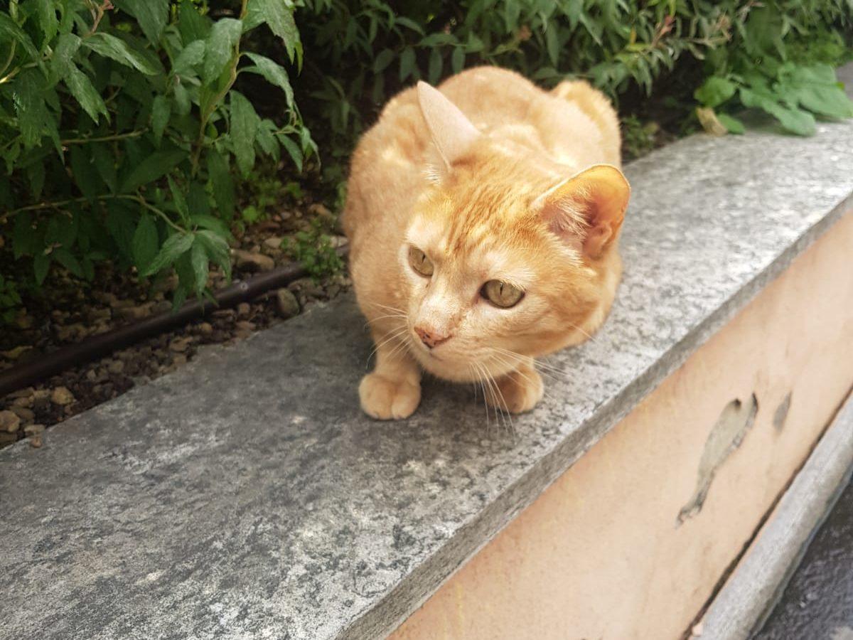 Nuove sistemazioni per i gatti sestesi
