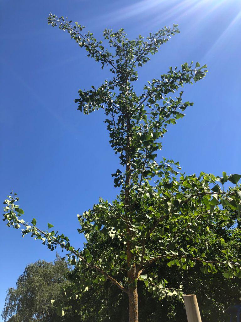 albero covid